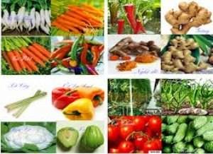 Thị trường xuất khẩu rau qủa 2 tháng năm 2015